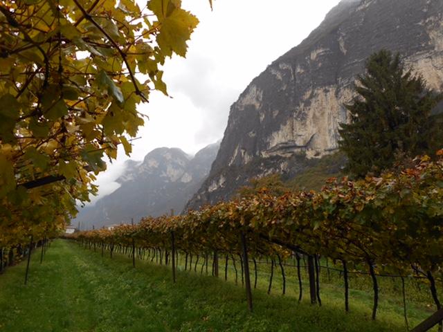 2015 10 オーストリア 194